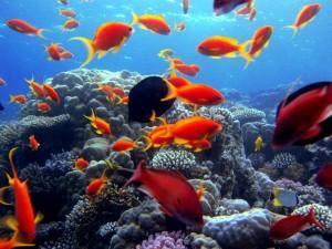Mar-Rosso